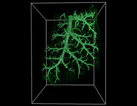 New technologies for imaging the human body (2012)